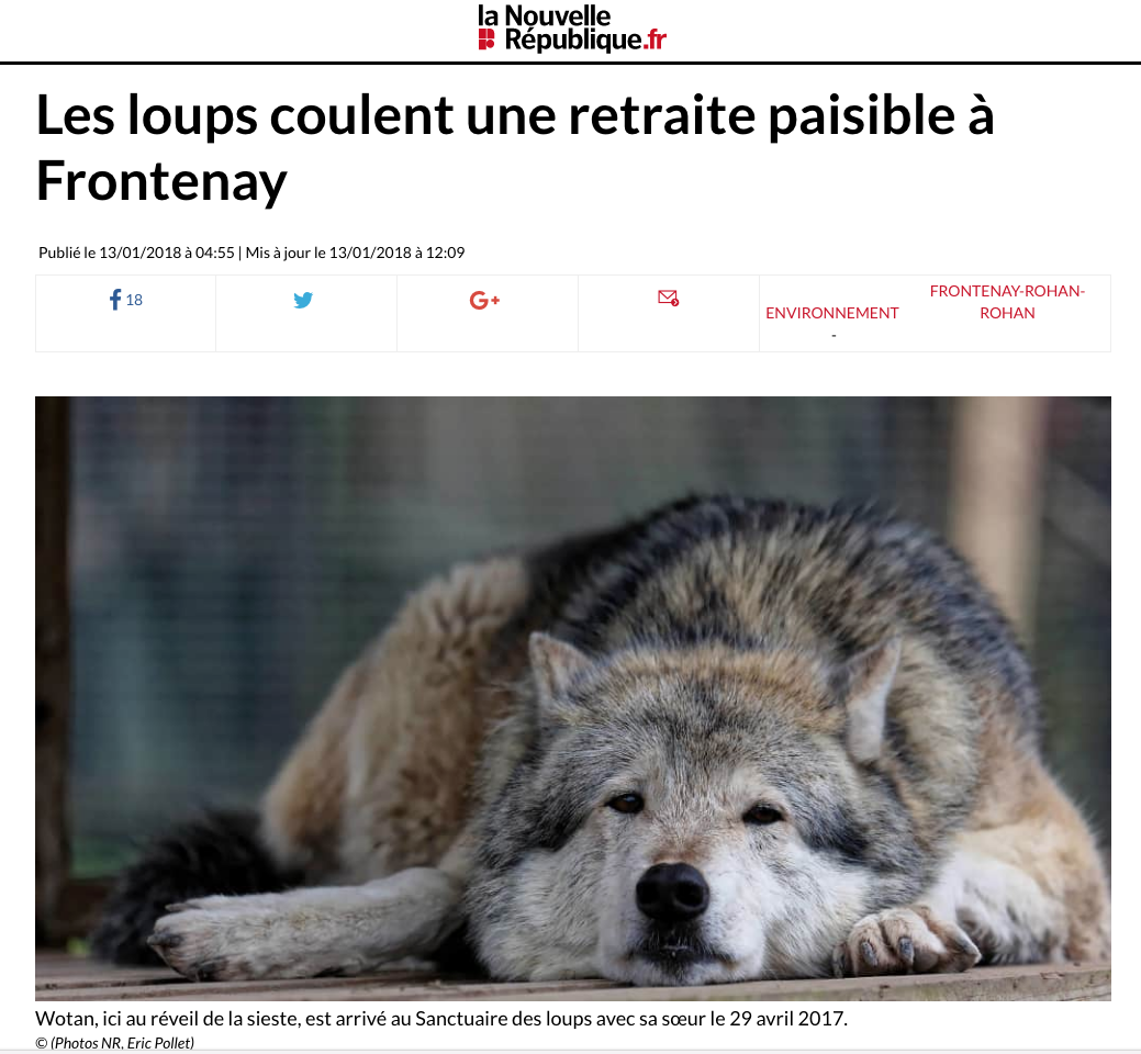 Les loups coulent une retraite paisible / Wolves cast a peaceful retreat