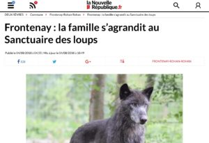 La famille s'agrandit au Sanctuaire des loups / The family gets bigger at the Wolf Sanctuary