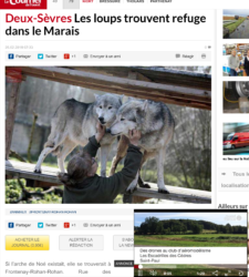 Les loups trouvent refuge dans le Marais / Wolves find refuge in the Marais